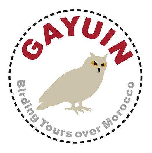 Gayuin Birding Tours